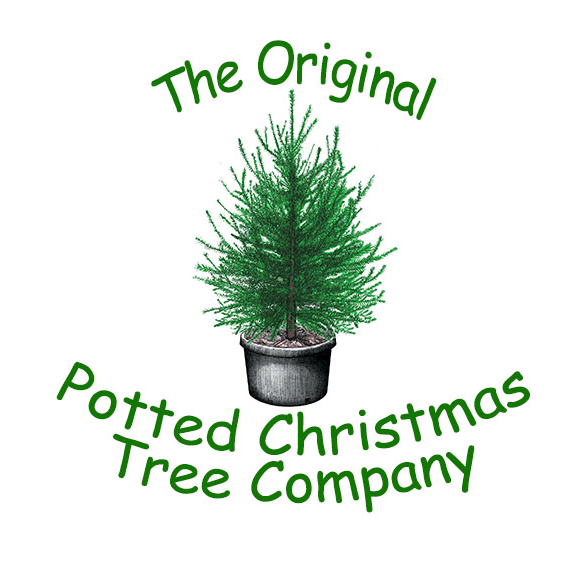 The Original Potted Christmas Tree Company Make A Tree Show Up At